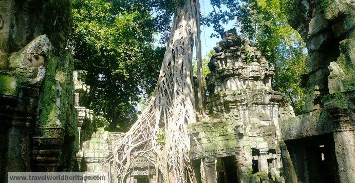 At about 900 years old, the temple actually predates the trees that grow on it.